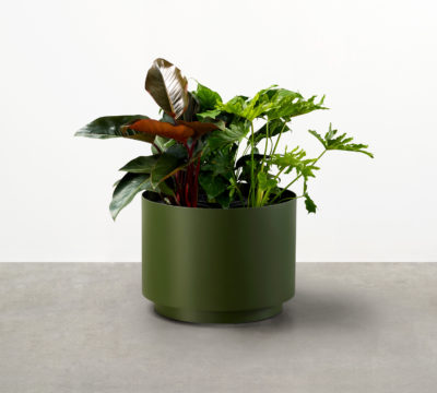 The smooth geometry of the Drum Planter defines this series of stylish contemporary indoor-outdoor planters at home or work, outdoors or in.